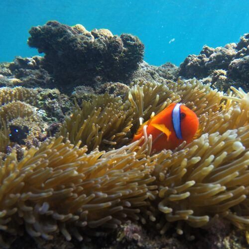 GBR_SGBR_2015_Ben Andryc_Great Eight_Clownfish In Anemone sml